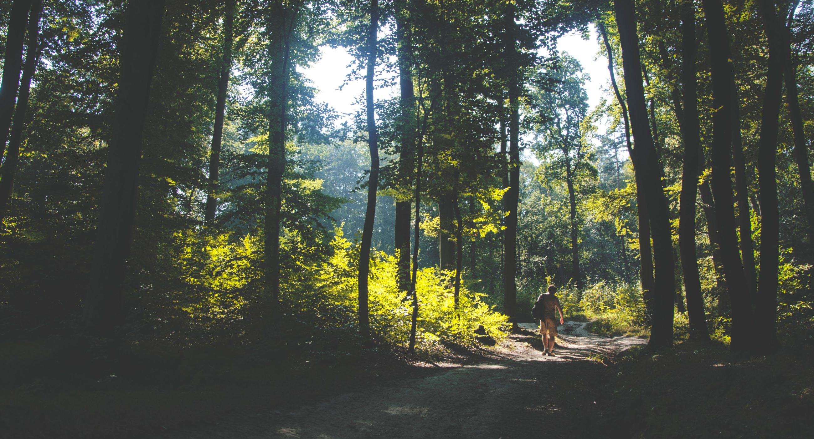 guild living-walk in woods